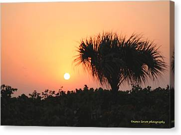 Sun Rise And Palm Tree Canvas Print