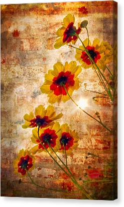 Sun Seekers Canvas Print by Debra and Dave Vanderlaan