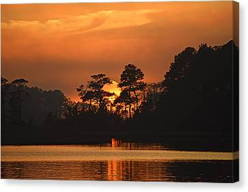 Canvas Print featuring the photograph Sun Setting In Trees by Bill Swartwout