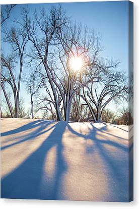 Sun Through Snow Covered Trees Canvas Print