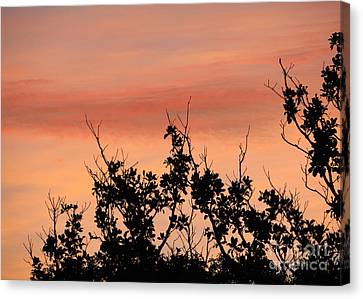 Canvas Print featuring the photograph Sun Up Silhouette by Joy Hardee