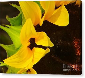 Canvas Print featuring the photograph Sun Worshipper by Joy Hardee