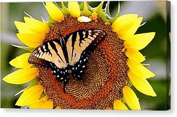 Sunbather Canvas Print by Cole Black