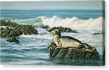 Sunbather  Canvas Print by Paul Krapf