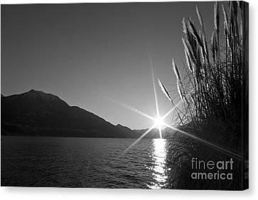 Sunbeam Canvas Print by Maurizio Bacciarini