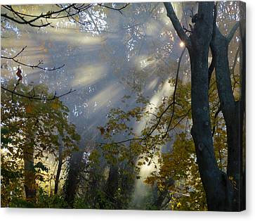 Sunbeam Morning Canvas Print by Dianne Cowen