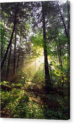 Sunbeams In Dense Forest, Great Smoky Canvas Print