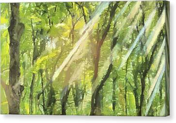 Sunbeams In The Forest Canvas Print by Dan Sproul
