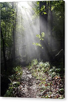 Sunbeams On The Appalachian Trail Canvas Print