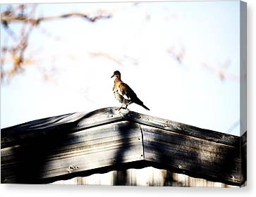 Canvas Print featuring the photograph Sunday Morning  by Jessica Shelton