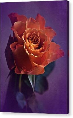 Sunday Rose  Canvas Print