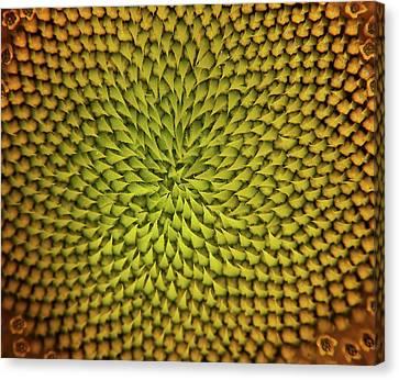 Canvas Print featuring the photograph Sunflower Sundial by Britt Runyon