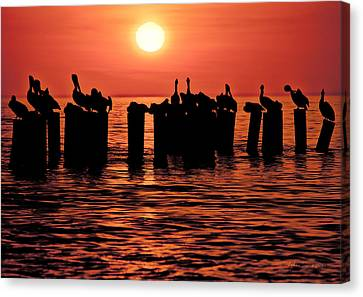 Canvas Print featuring the photograph Sundown With Pelicans by Julis Simo