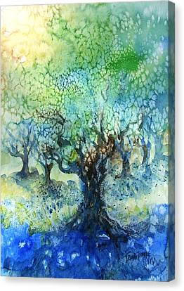 Sundrenched Olive Grove   Canvas Print by Trudi Doyle