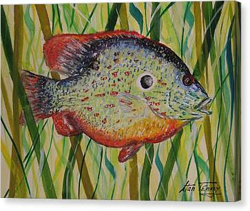 Sunfish Canvas Print