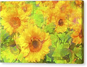 Sunflower 19 Canvas Print by Pamela Cooper