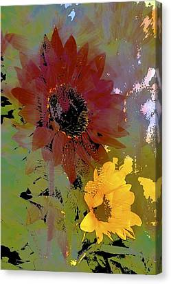 Sunflower 33 Canvas Print by Pamela Cooper