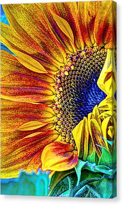 Sunflower Abstract Canvas Print by Heidi Smith