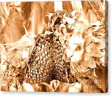 Sunflower - After Summer Has Gone Canvas Print by Janine Riley