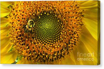 Sunflower An Bumble Canvas Print by Brittany Perez