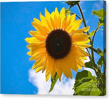 Sunflower And Bee At Work Canvas Print