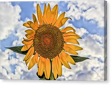 00008 Sunflower And Clouds Canvas Print by Photographic Art by Russel Ray Photos