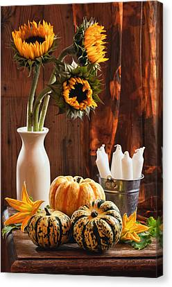 Sunflower And Gourds Still Life Canvas Print by Amanda Elwell