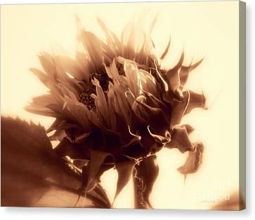 Sunflower - Au Revoir Canvas Print by Janine Riley