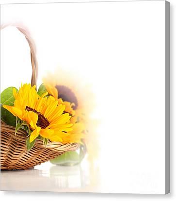 Sunflower Beautiful Canvas Print