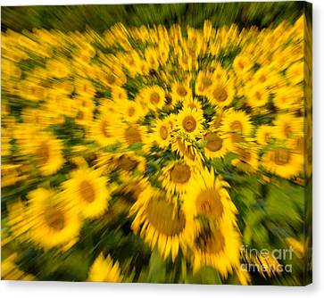 Canvas Print featuring the photograph Sunflower Blur by Dale Nelson
