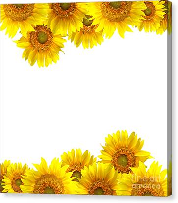 Sunflower Canvas Print by Boon Mee