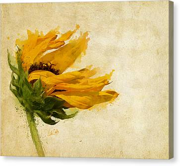 Sunflower Breezes Canvas Print by Nikki Marie Smith