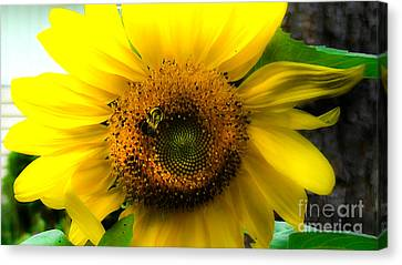 Sunflower Canvas Print by Brittany Perez