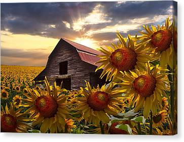 Sunflower Dance Canvas Print by Debra and Dave Vanderlaan