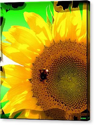 Canvas Print featuring the digital art Sunflower by Daniel Janda