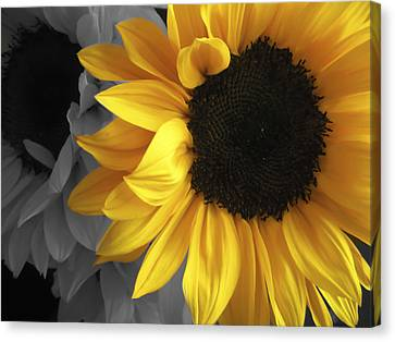 Sunflower Days Canvas Print by The Forests Edge Photography - Diane Sandoval