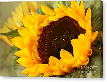 Sunflower Canvas Print by Eden Baed