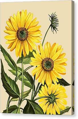 Countryside Canvas Print - Sunflower by English School