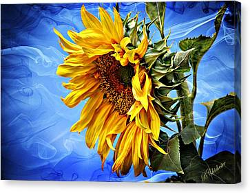 Canvas Print featuring the photograph Sunflower Fantasy by Barbara Chichester