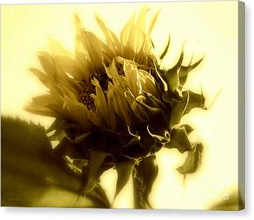 Sunflower - Fare Thee Well Canvas Print by Janine Riley