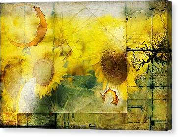 Canvas Print featuring the photograph Sunflower Grunge by Kathy Churchman