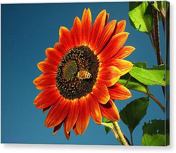 Canvas Print featuring the photograph Sunflower Honey Bee by Joyce Dickens