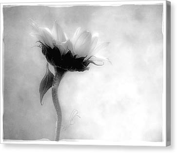 Sunflower In Profile Canvas Print by Louise Kumpf