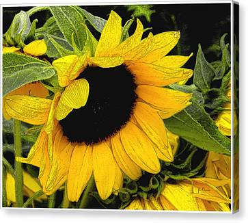 Canvas Print featuring the photograph Sunflower by James C Thomas