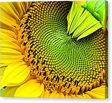 Sunflower Kaleidescope Canvas Print