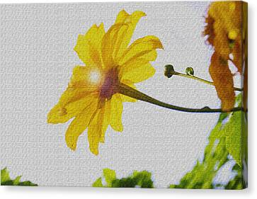 Canvas Print featuring the photograph Sunflower by Kandy Hurley