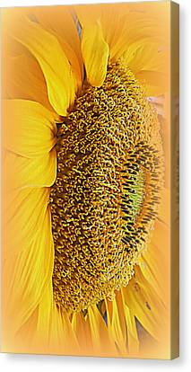Sunflower Canvas Print by Kay Novy