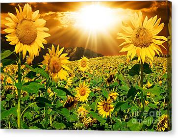 Canvas Print featuring the photograph Sunflower Light Magic by Boon Mee