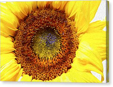 Sunflower Love Canvas Print by Les Cunliffe
