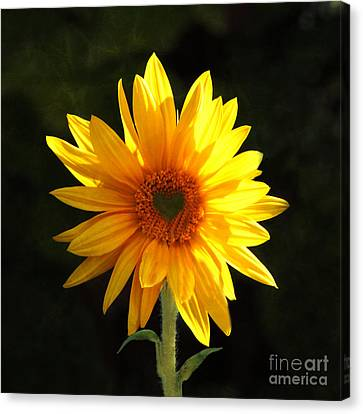 Canvas Print featuring the photograph Sunflower Love by Marjorie Imbeau